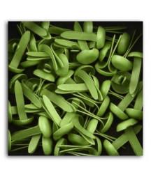MAHE - Small Brads - Vert